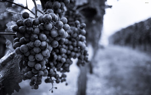 23143-grapes-in-the-vineyard-2880x1800-photography-wallpaper
